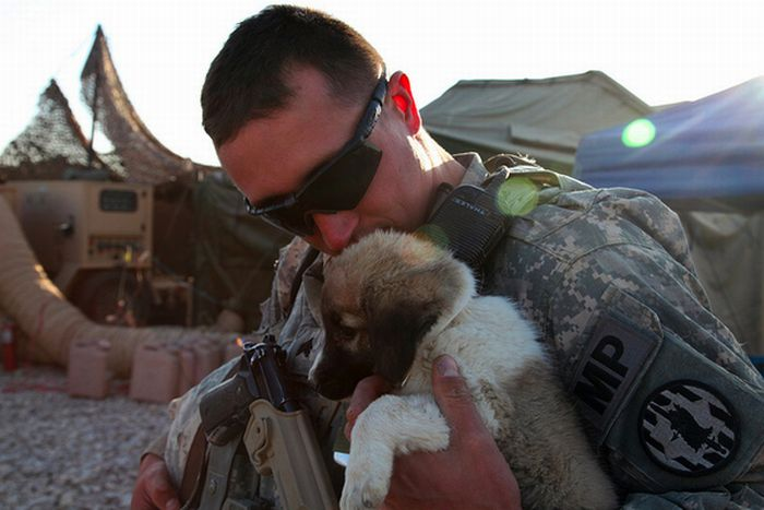 Soldiers and Pets (48 pics)