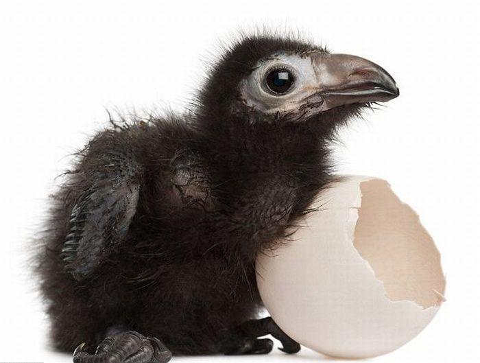 Me and My Egg (6 pics)