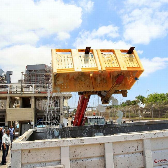 Jellyfish Clog Water Supply of Power Station in Israel (12 pics)