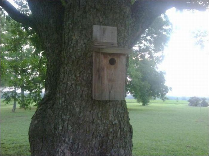 Surprise in a Birdhouse (3 pics)