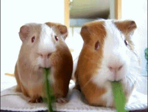 Animal GIFs (25 gifs)