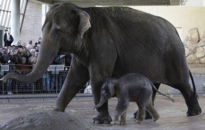 Elephants (100 pics)