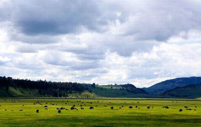 Yellowstone National Park (41 pics)