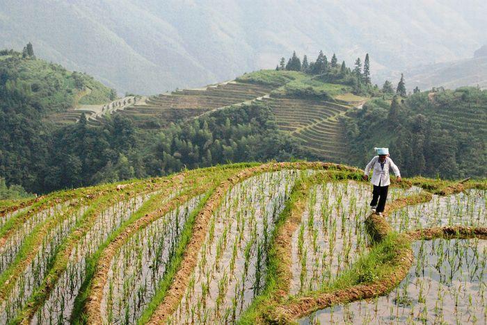 The Amazing Longsheng Rice Terraces (34 pics)