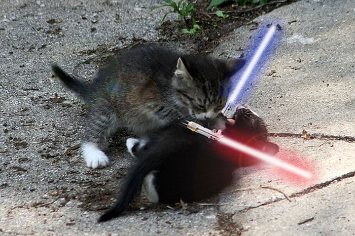 When Animals Go Star Wars On Each Other (14 pics)