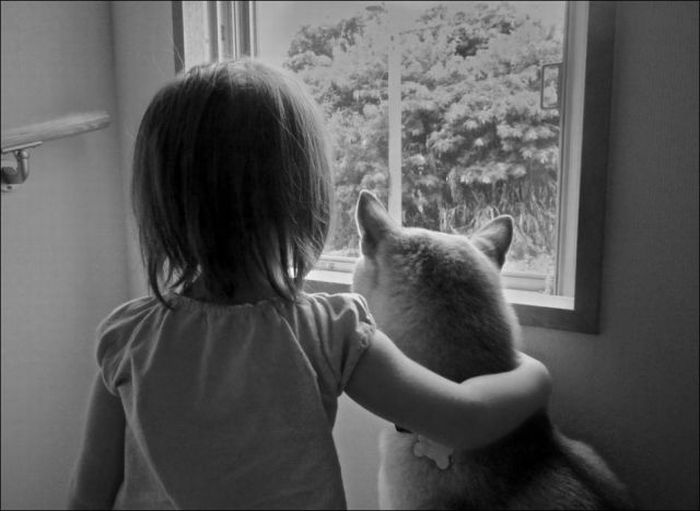 Love and Friendship of Pets (36 pics)