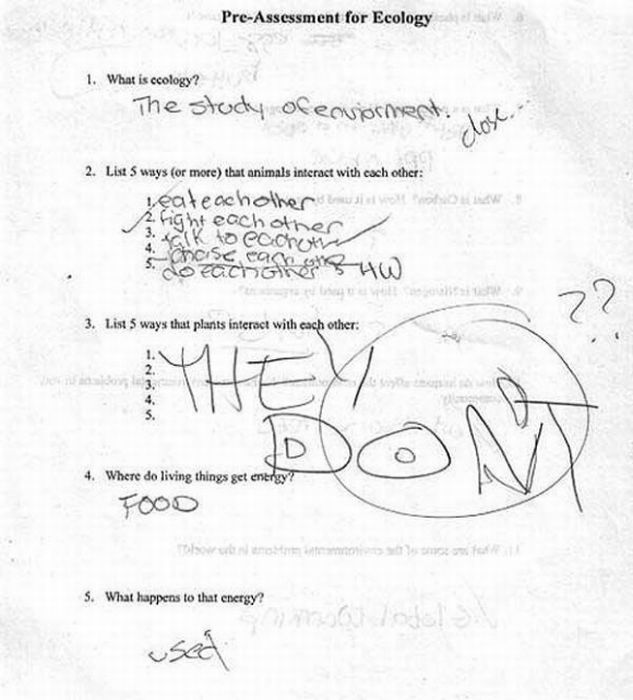 Funny Exam Answers. Part 5 (50 pics)