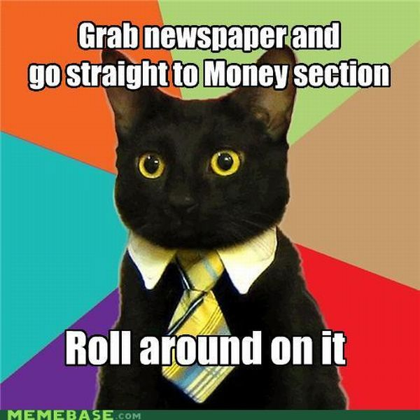 Business Cat (41 pics)