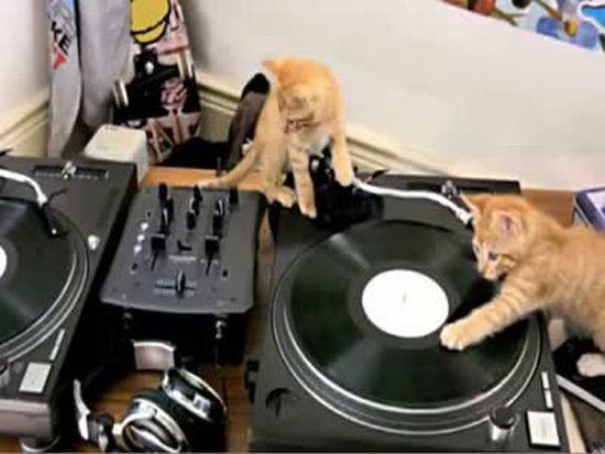 Kittens on DJ Decks