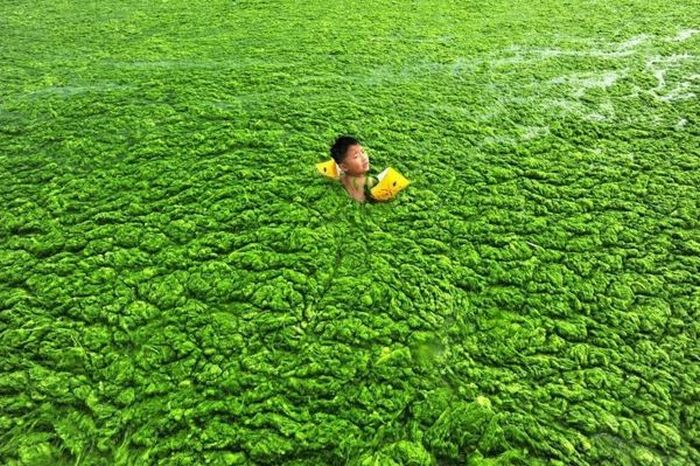 Chinese Beach Turns Green (8 pics)