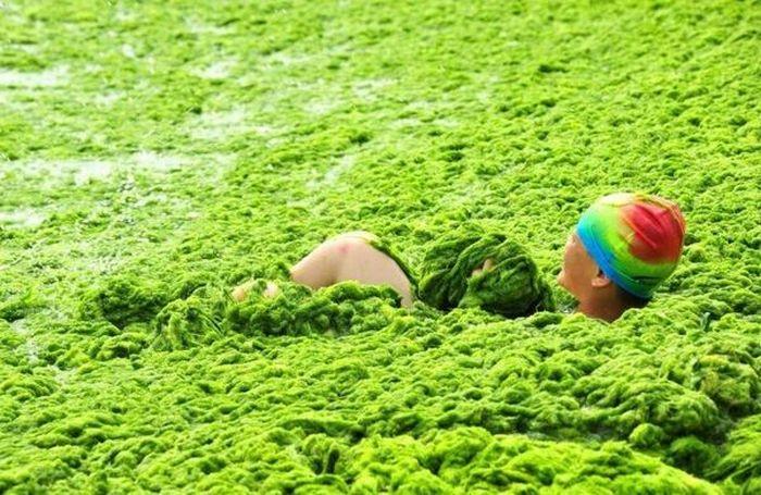 Chinese Beach Turns Green (8 pics)