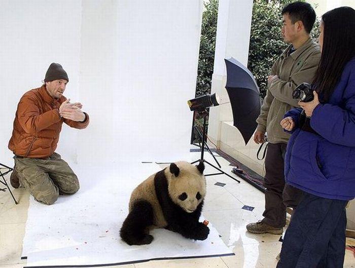Beautiful Animal Photos (20 pics)