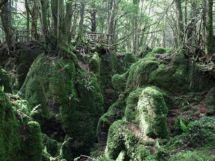 Puzzlewood – Tolkien's Inspiration for Middle-earth (21 pics)