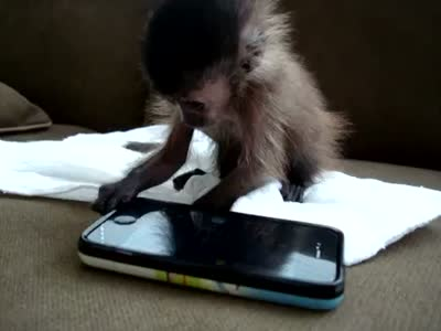 Baby Monkey Playing With iPhone