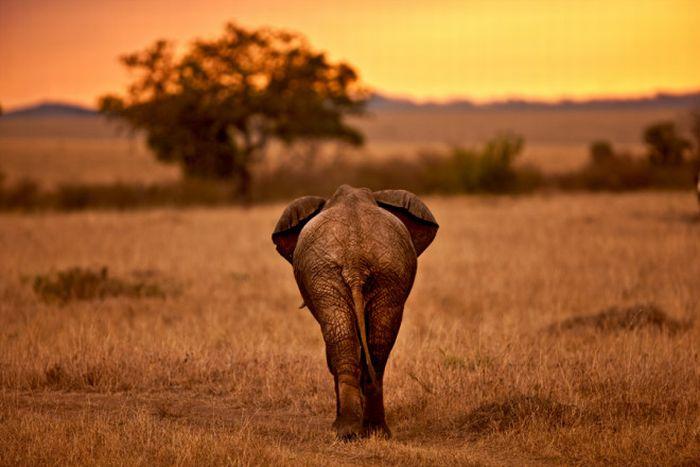 Animal Kingdom by Suha Derbent (32 pics)