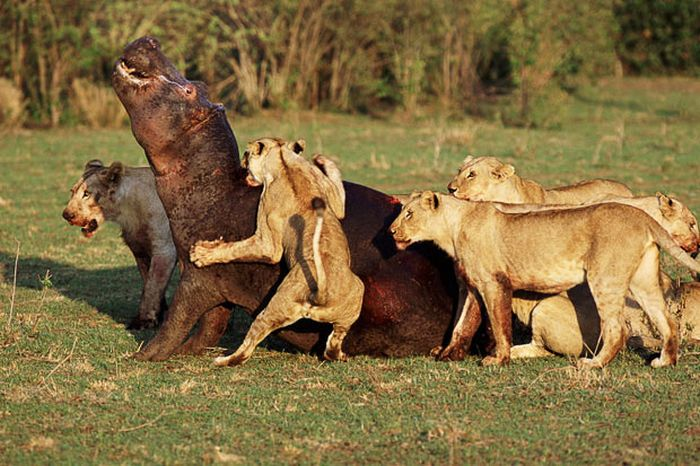 Animal Conflicts (18 pics)