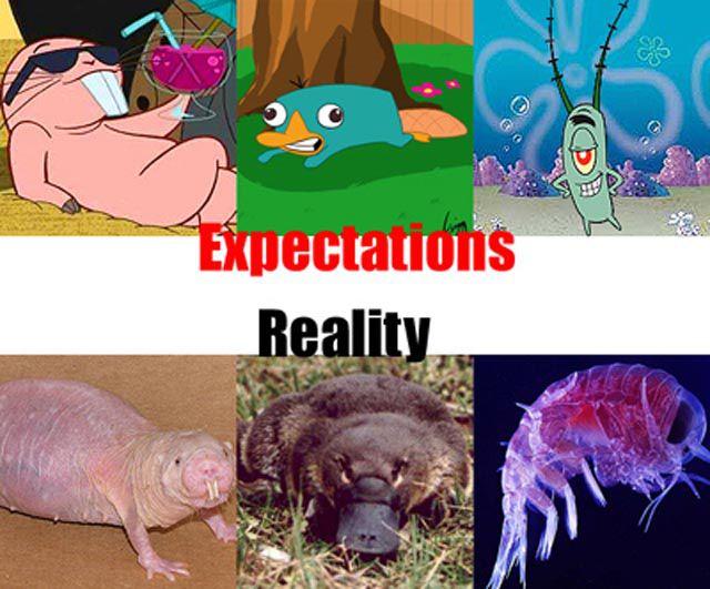 Expectations vs Reality. Part 2 (21 pics)