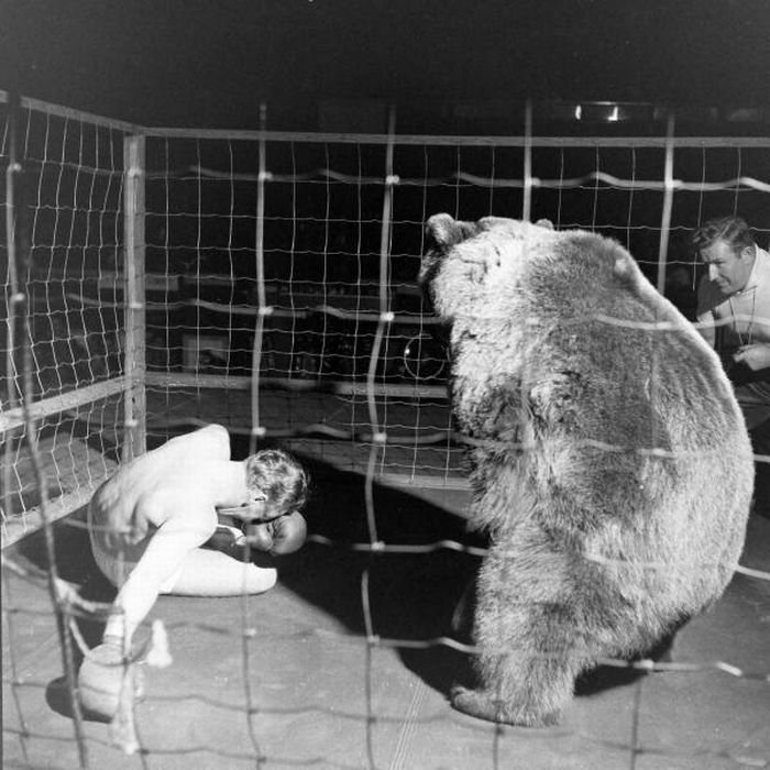 Bear Boxing with a Man (6 pics)