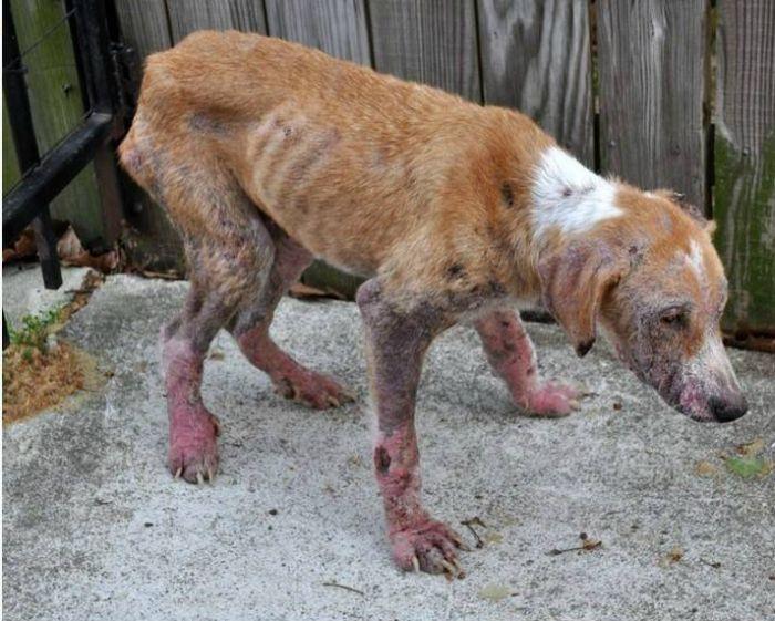 Amazing Dog Transformations (9 pics)