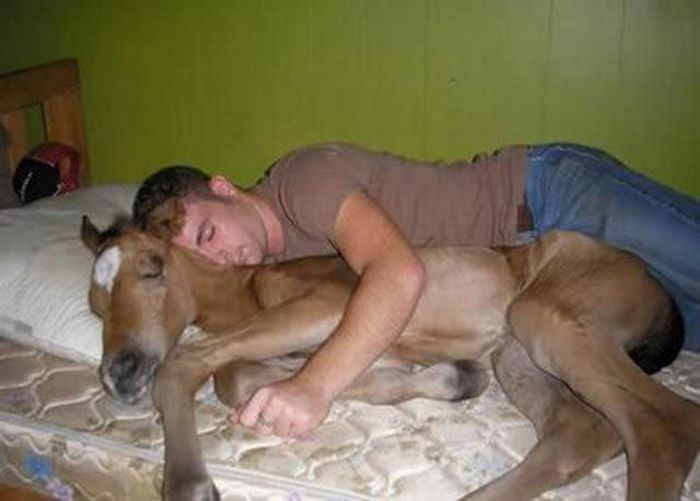 Napping With Pets (20 pics)