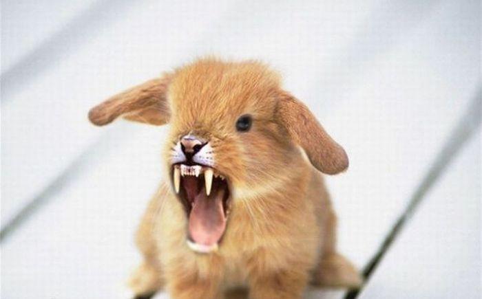 Scary Photoshop Made Animals (51 pics)