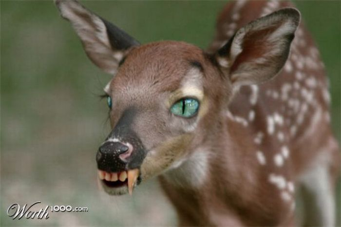 Scary Photoshop Made Animals (51 pics)