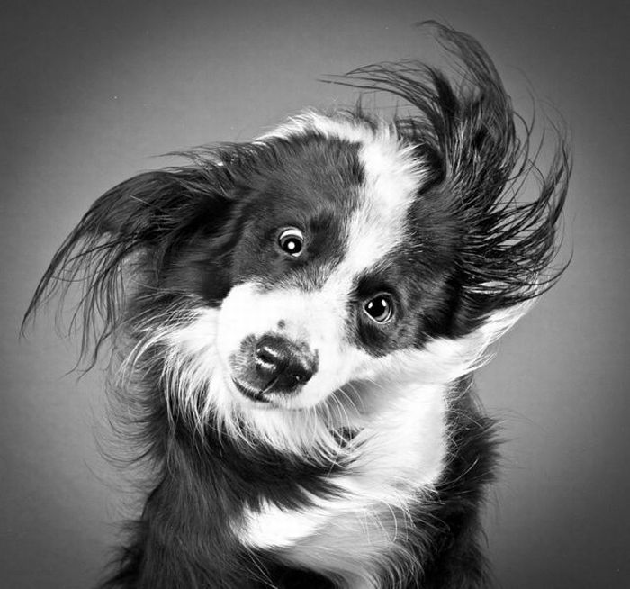 Funny Dogs Shaking Heads (17 pics + 1 gif)