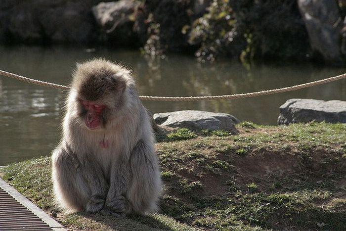 Meditating Monkeys (22 pics)