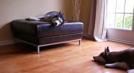 Two Dogs Get Into A Heated Argument