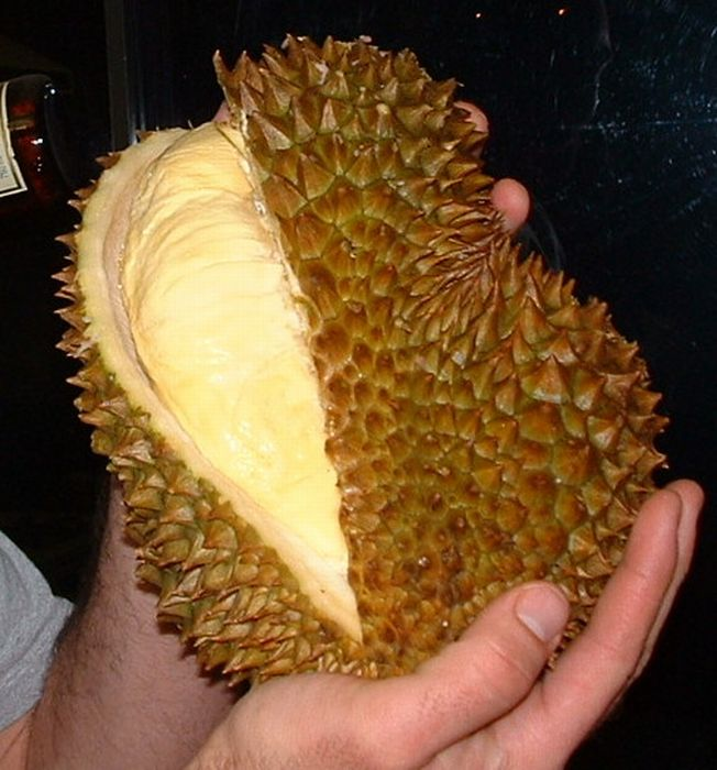 Exotic Animal Inside an Exotic Fruit (4 pics)