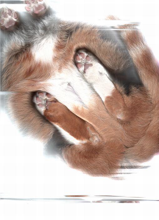 The Cat Scan (32 pics)
