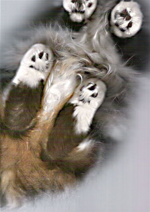The Cat Scan (32 pics)