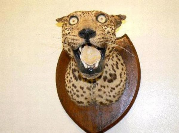 Awful Taxidermy (40 pics)