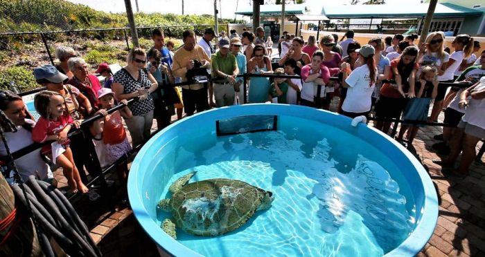Swim, Turtle, Swim (12 pics)