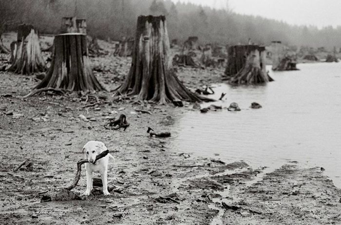 Old Dogs (32 pics)