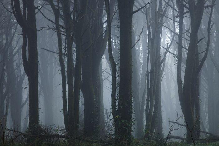 Fog Forests (32 pics)