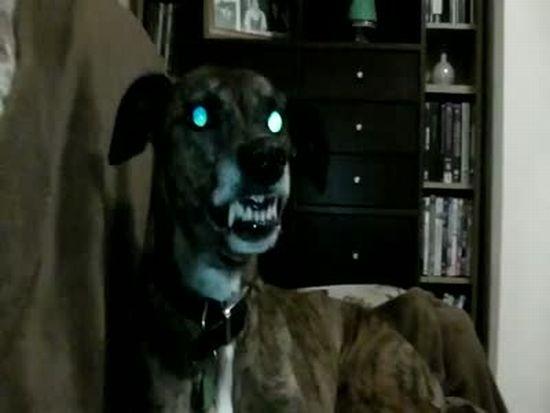 Angry Demon Dog