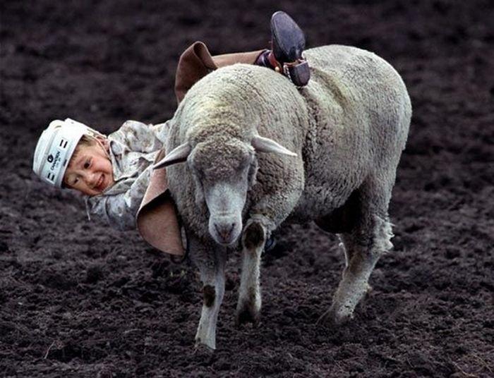 Children Riding Sheep (13 pics)