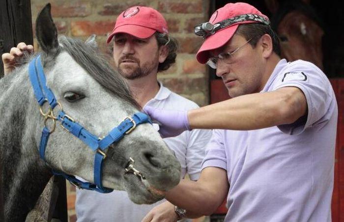 Horse Dentistry (11 pics)