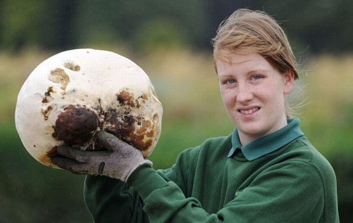 Giant Mushroom (3 pics)