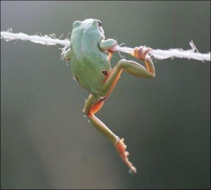Nice Grip, Frog! (5 pics)
