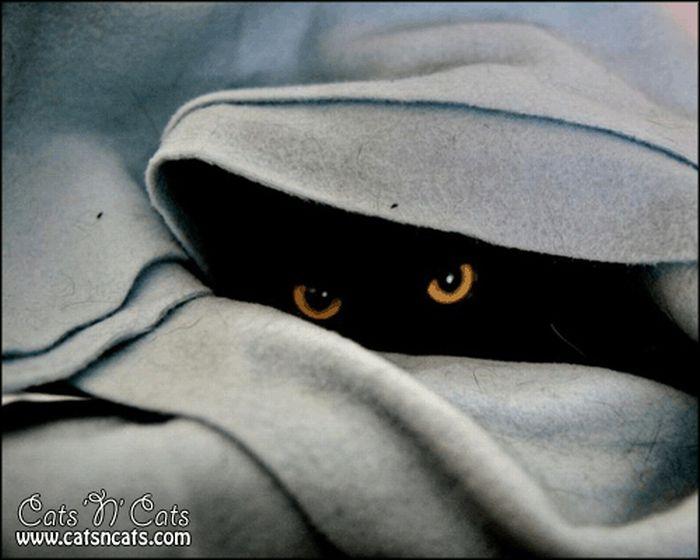 Spy Cats Pics (30 pics)