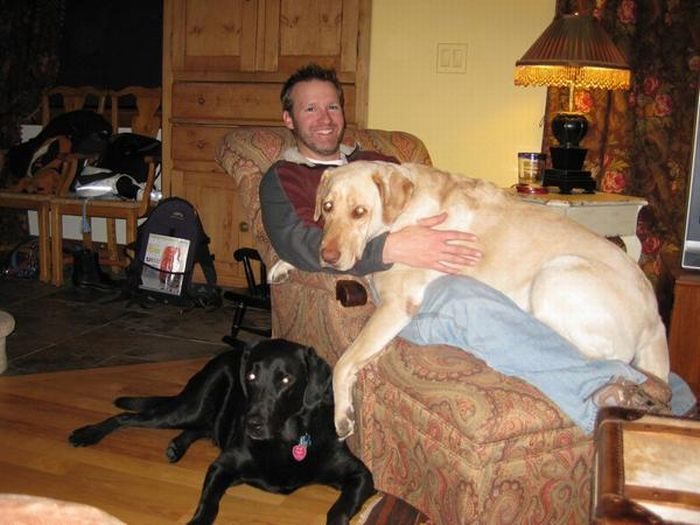 Dogs' True Friendship (21 pics)