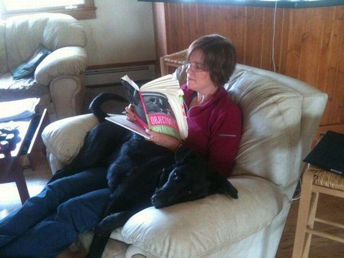 Dogs' True Friendship (21 pics)