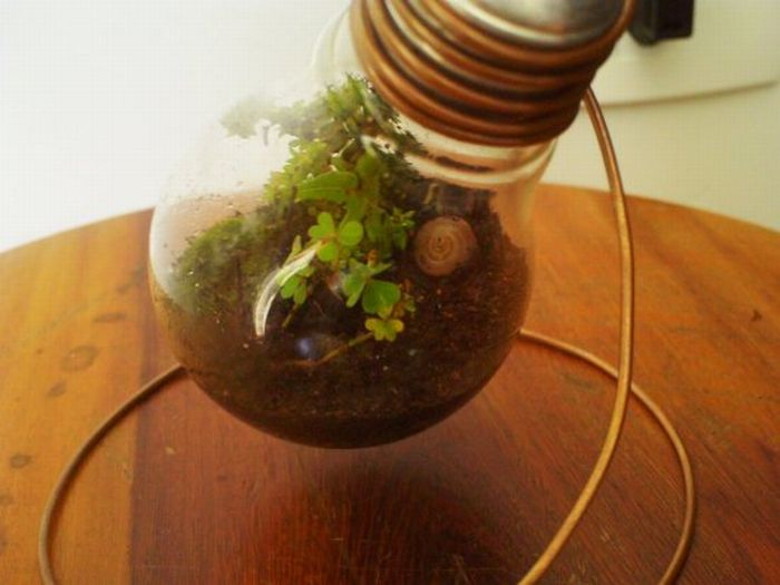 New Life Of Old Light Bulbs (27 pics)