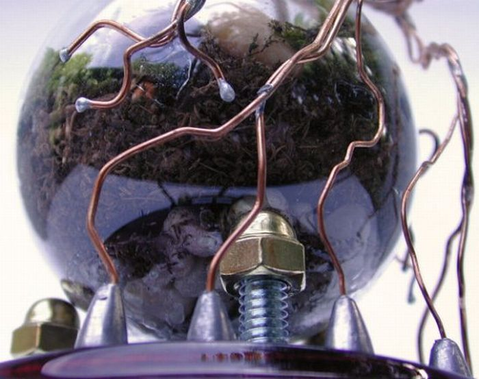 New Life Of Old Light Bulbs (27 pics)