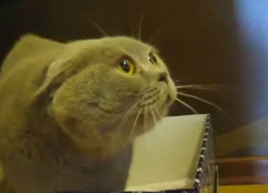 Funny Talking Cat (video)