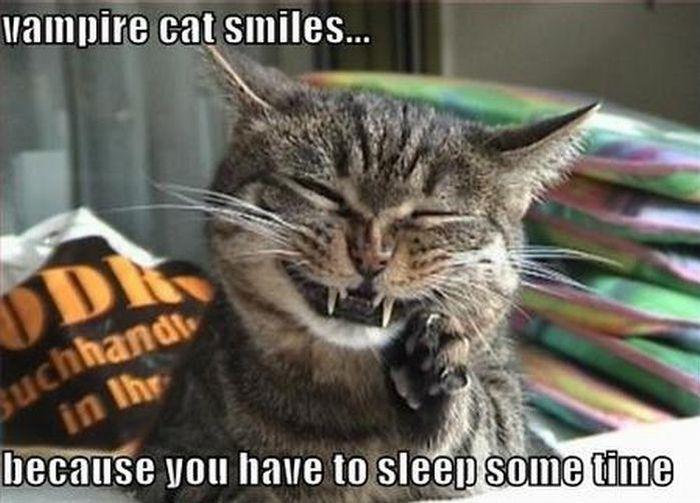Hilarious LOLcats (15 pics)