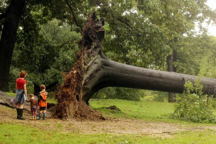 Powerful Hurricane Irene (50 pics)
