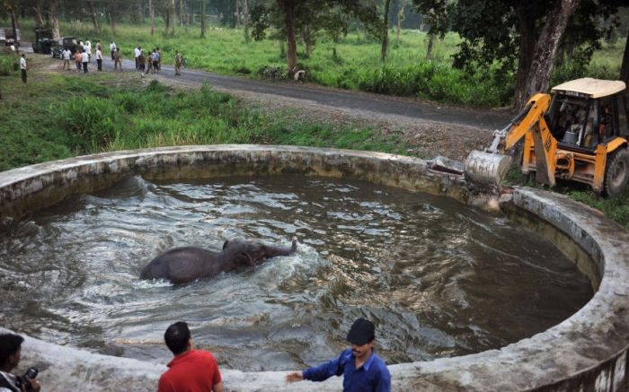 Baby Elephant Rescue From Drowning (6 pics)